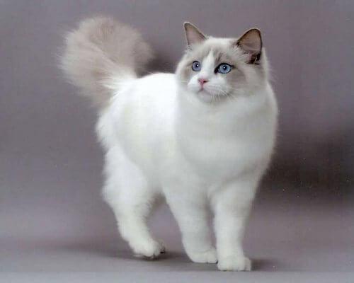 cute cats 1