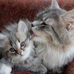 cute cats 10