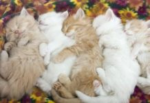 cute cats 11