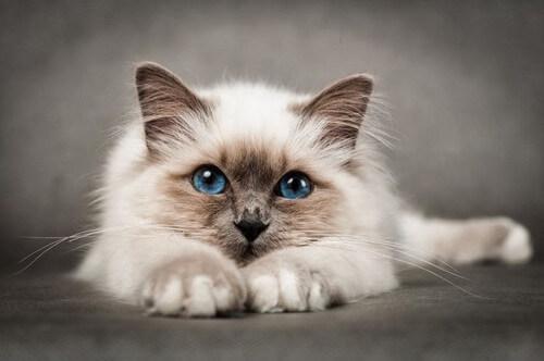 cute cats 4