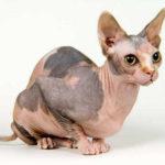 cute cats 5