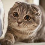 cute cats 6