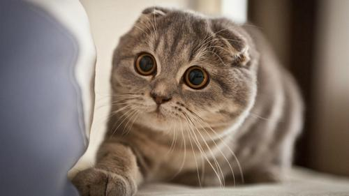 top 10 most wonderful cute cats in the feline world