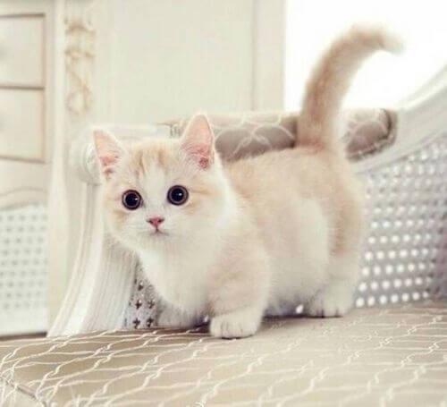 cute cats 8