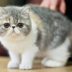 cute cats 9